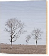 Three Trees - Nantucket Wood Print