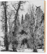 Three Trees Bw Wood Print