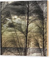 Three Trees Wood Print