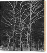 Three Trees In Black And White Wood Print