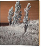 Three Trees  In Infrared On Top Of A Grassy Dune Wood Print