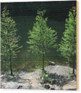 Three Trees Of Ohio Wood Print