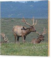 Three Tule Elk Bulls In Meadow Wood Print