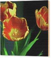 Three Tulips Photo Art Wood Print
