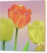 Three Tulips. Wood Print