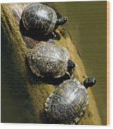 Three Turtles On A Log Wood Print