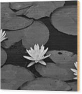 Three Water Lilies  Wood Print