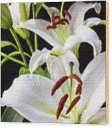 Three White Lilies Wood Print