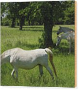Three White Lipizzan Horses Grazing In A Field At The Lipica Stu Wood Print