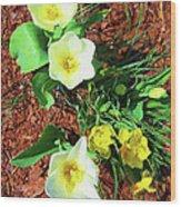 Three White Tulips Painting Wood Print