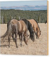 Three Wild Mustangs Wood Print