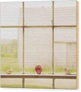 Three Window Shells Wood Print