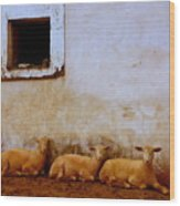 Three Wise Sheep Wood Print