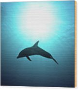 three year old Dolphin  Wood Print by Hagai Nativ