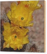 Three Yellow Cactus Flowers Wood Print