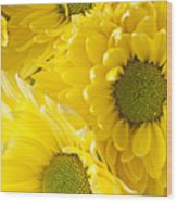 Three Yellow Daisies  Wood Print by Garry Gay