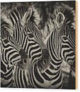 Three Zebra Wood Print