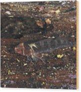 Threefin Blennie Like Fish On Log Wood Print