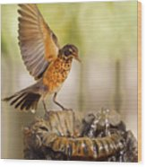 Thristy Robin Wood Print