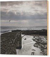 Throne Of Seagulls Wood Print