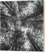 Through The Canopy Wood Print