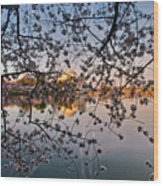 Through The Cherry Tree Wood Print