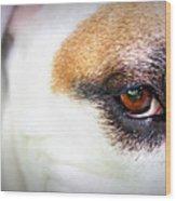 Through The Eyes... Wood Print