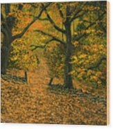 Through The Fallen Leaves Wood Print