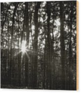 Through The Forest 4 Wood Print