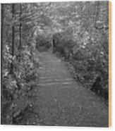 Through The Forest Canopy Black And White Wood Print