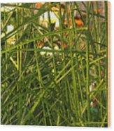 Through The Grass Curtain Wood Print