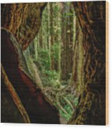 Through The Knothole Wood Print