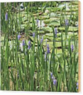 Through The Lily Pond Wood Print