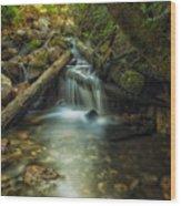 Through The Mossy Logs Wood Print