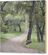 Through The Oaks Wood Print
