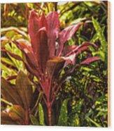 Ti Plant Wood Print