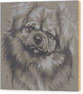 Tibetan Spaniel Wood Print