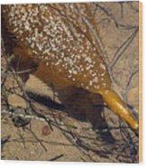 Tidepool Kelp Wood Print