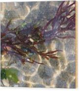 Tidepool Seaweed Wood Print