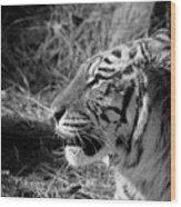 Tiger 2 Bw Wood Print