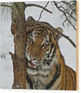 Tiger 3 Wood Print by Ernie Echols