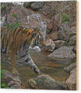 Tiger Crossing Poster Wood Print