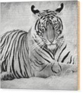 Tiger Cub At Rest Wood Print