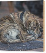 Tiger Dog And The Buskers Wood Print