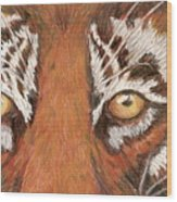 Tiger Eyes 2 Wood Print