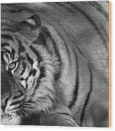 Tiger Eyes White Wood Print