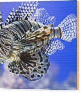 Tiger Fish Wood Print