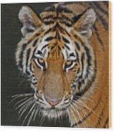 Tiger Hunting Wood Print