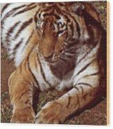 Tiger I Wood Print