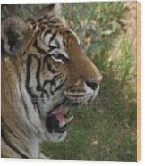 Tiger II Wood Print